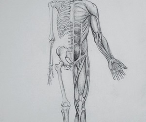 body, human, and medicine image