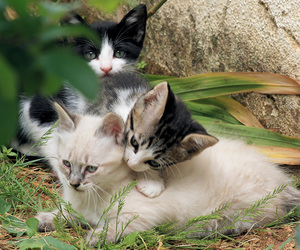 beautiful, cats, and little image