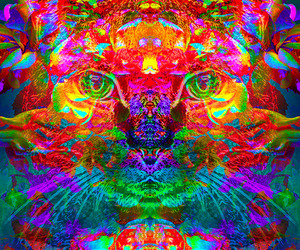 cat, dope, and trippy image