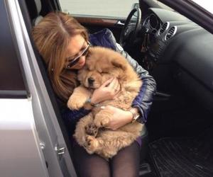adorable, car, and puppy image