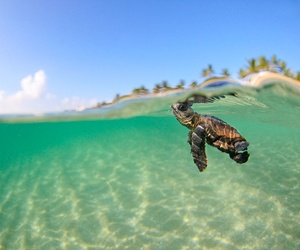 adorable, baby, and turtle image