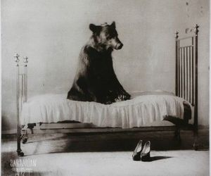 bear, bed, and black and white image