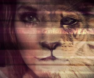 face, lion, and wild image