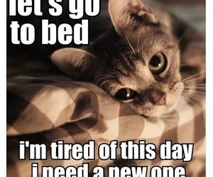 cat, quote, and bed image