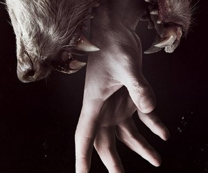 hand, werewolf, and horror image