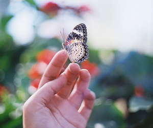butterfly, photography, and nature image