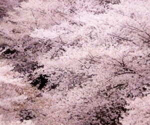 japan, spring, and cherry blossom image