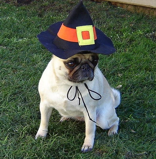 & Halloween Pug Witch Costume on We Heart It