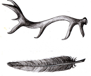 feather and deer image
