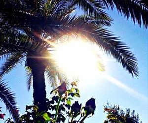 garden, sun, and photography image
