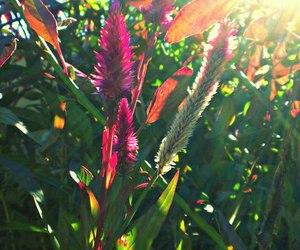 photography, plants, and sun shinning image