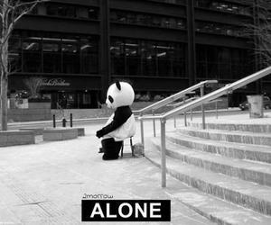 alone, panda, and black and white image
