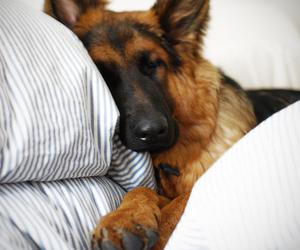 dog and sweet image