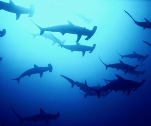 sea, sharks, and water image