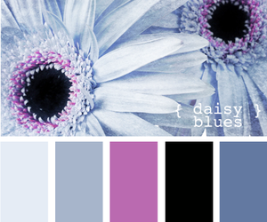 black, blue, and color image