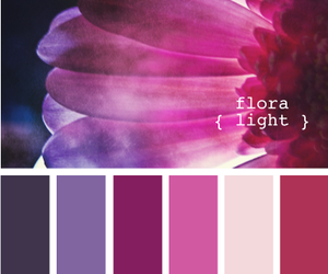 color, flora, and flower image