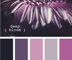bloom, color, and design image