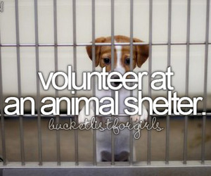 volunteer, animal, and animal shelter image
