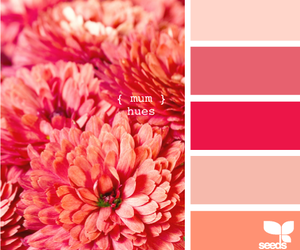color, flowers, and mum image