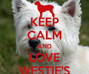 keep, West, and westie image