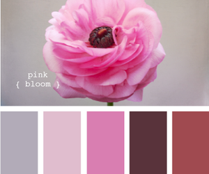 flowers, pink, and design seeds image