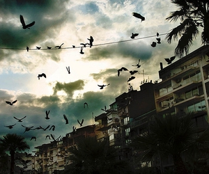 birds, crows, and city image