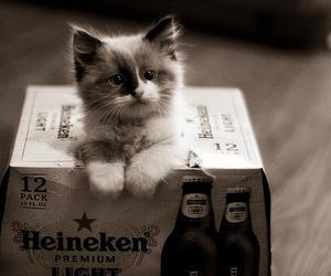 cat, cute, and heineken image