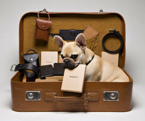 dog and suitcase image