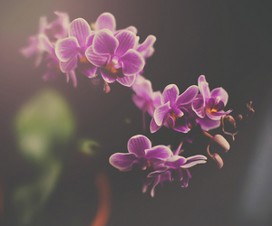 lol, orchids, and my neighbors image