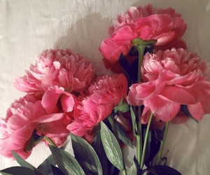 beautiful, fresh, and peony's image