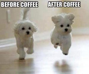 dog, coffee, and funny image