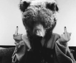 bear, black and white, and grunge image
