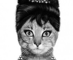 cat, audrey hepburn, and funny image
