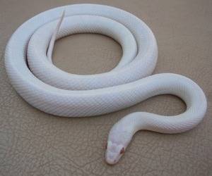 snake and white image