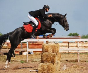adrenaline, horse, and jump image