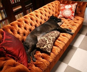 couch, dog, and home decor image