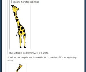 funny, giraffe, and lol image