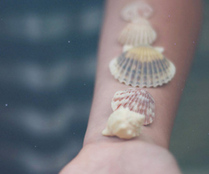 shell, hand, and vintage image