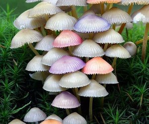 mushroom, nature, and pastel image