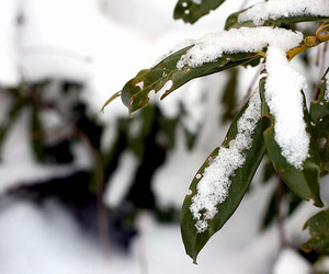 2009, cold, and green image