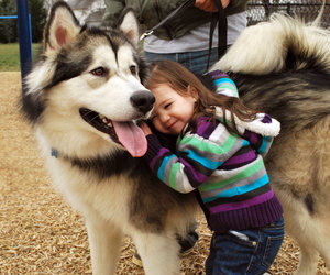 dog, husky, and kids image