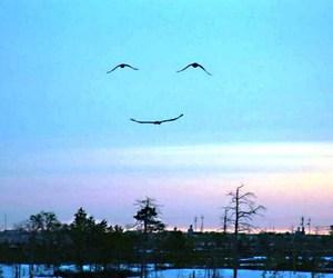 smile, bird, and sky image