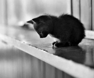 cat, cute, and black and white image