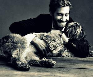 dog, black and white, and jake gyllenhaal image