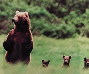 bear, animal, and nature image