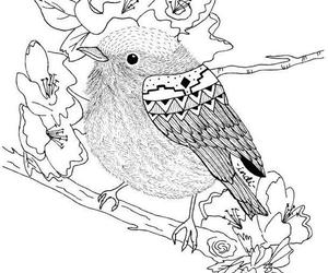 bird, black and white, and coloring book image
