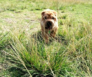 dog, grass, and jungle image