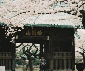 asian, building, and cherry blossoms image