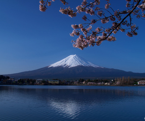 blossom, sakura, and cherry image