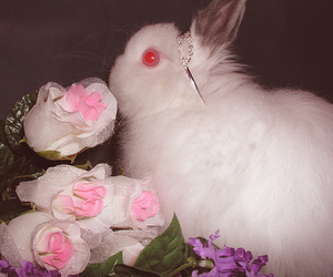 bunny, pink, and red image